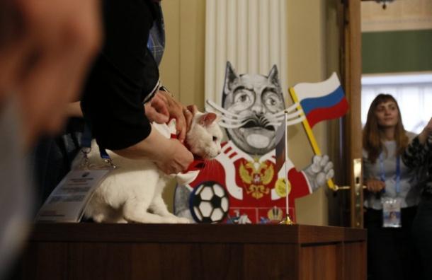 Кот Ахилл сделал ставки вматче Россия— Египет