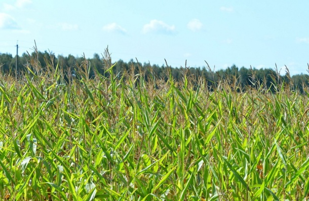 Петербургские депутаты предложили брать плату заперевод сельхозземель под застройку
