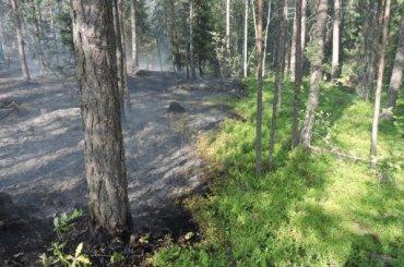 Тушить горящий парк «Монрепо» отправили пожарный поезд