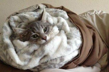 Главный синоптик Петербурга предсказал холодные выходные