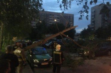 Рухнувшее дерево разбило две машины наулице Чудновского