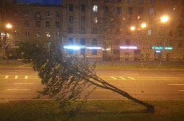 Штормовой ветер повалил дерево напровода наСтачек