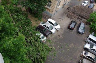 Дерево упало на машину с людьми на Большеохтинском проспекте