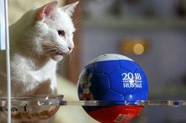 Кот Ахилл рассказал, кто выиграет вматче Нигерии иАргентины