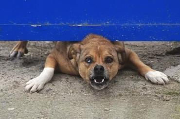 Правила содержания собак вПетербурге ужесточили