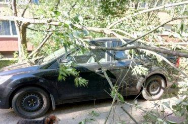 Ветер продолжает валить деревья вПетербурге