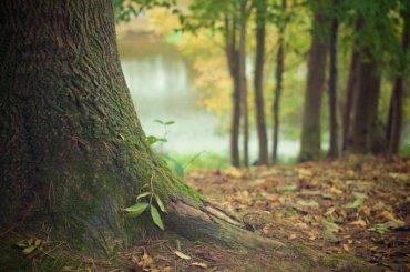 Около Петербурга воссоздадут зеленый пояс