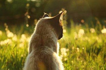 Пьяный москвич убил кошку ивыбросил кота изокна