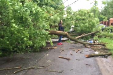Упавшее вСтрельне дерево снесло фонарный столб