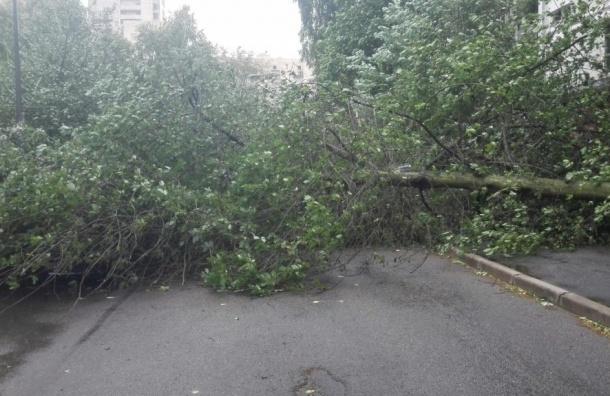 Почти 90 деревьев рухнули из-за ветра вПетербурге