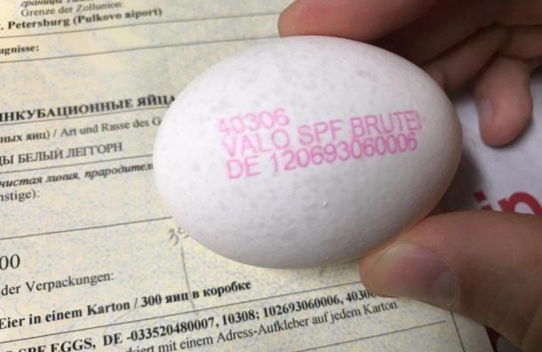 Партию яиц изГермании задержали ваэропорту Пулково