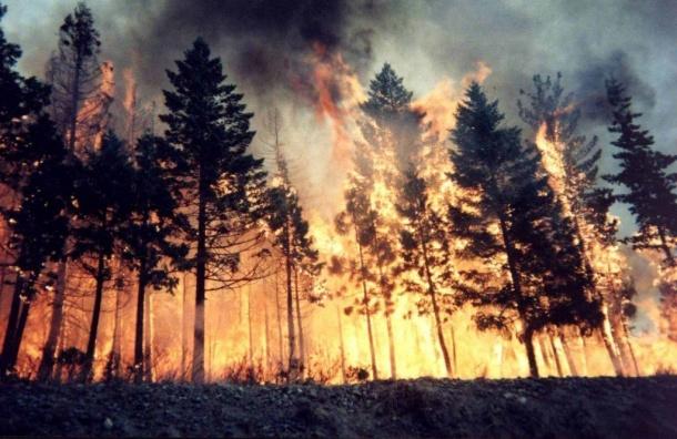 Угосударства нехватает сил для тушения пожаров вЛадожских шхерах