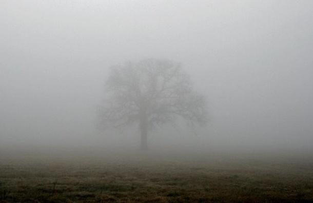 Петербург погрузился вутренний туман