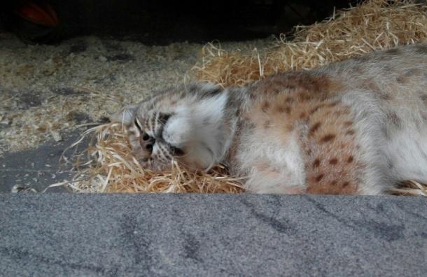 Зверей Ленинградского зоопарка посадили надиету