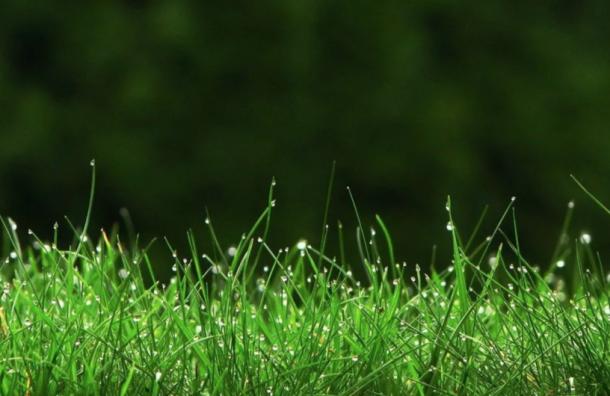 Петербург прирастет 1,5 тысячей гектаров зеленых зон