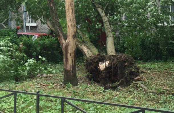 Ветер вПетербурге валит деревья исрывает крыши