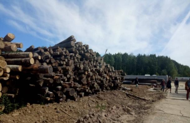 Экологи хотят зеленый пояс