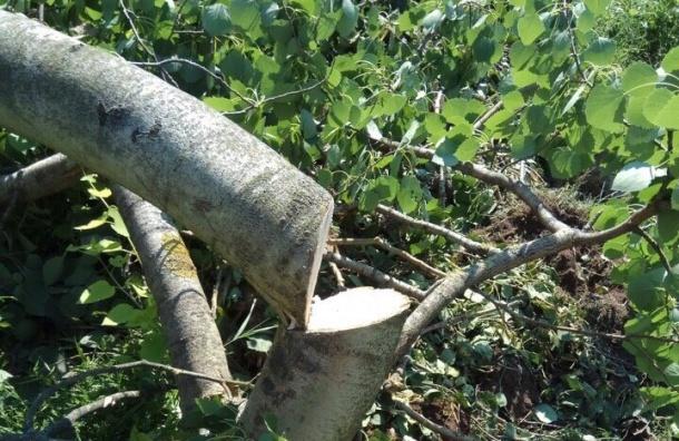 Два десятка деревьев срубили вКалининском районе