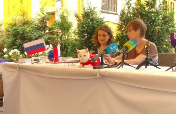 Кот Ахилл переедет жить косновательнице Музея кошки