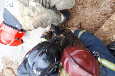 Пожарные спасли увязшую впеске собаку наДальневосточном проспекте