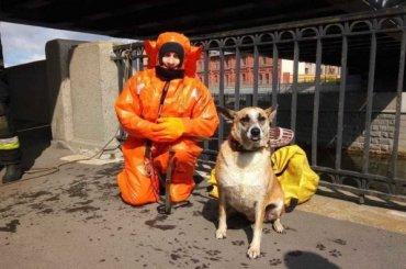 Сотрудники МЧС спасли собаку изОбводного канала