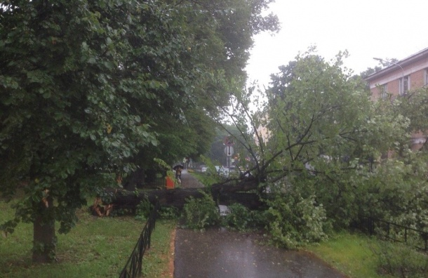 Ветер ломает деревья ирекламные конструкции вПетербурге