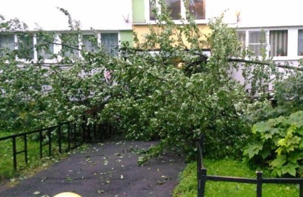 Почти 200 деревьев упали вПетербурге вночь на21августа