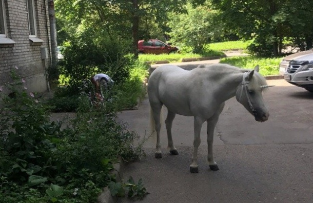 Граждан Павловска удивил белый конь вкостюме единорога