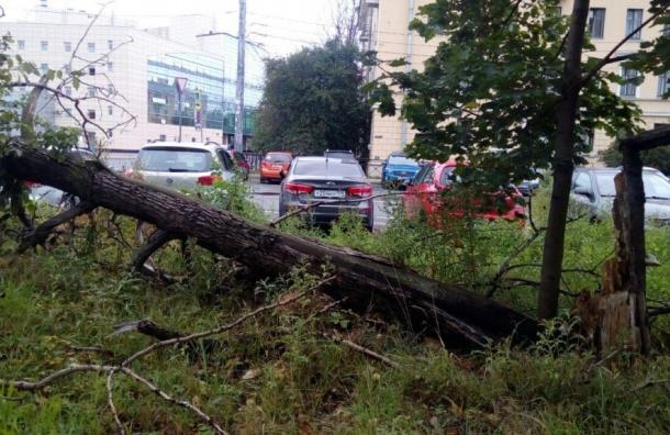 Дерево рухнуло у«Волковской»