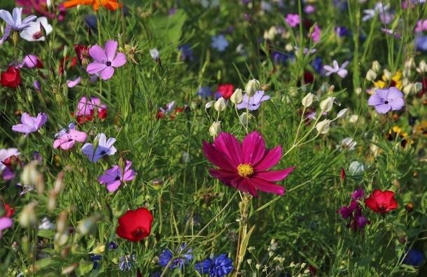 Петербуржцы выберут лучшие сады ипарки города
