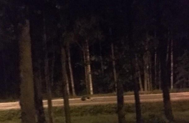 Мотоциклист сбил лося наПриморском шоссе