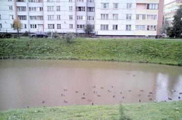 Комитет поприродопользованию заключит госконтракт наоздоровление реки Новая