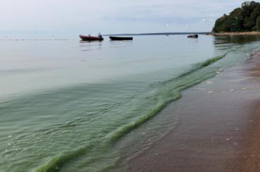 Финский залив зацвел вслед зареками иканалами