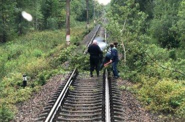 Пассажиры электрички вПетербурге очистили пути отупавших деревьев