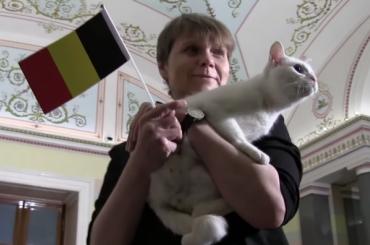 Эрмитажный кот Ахилл возглавил рейтинг кисок