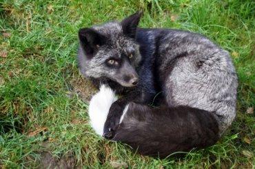Петербургские ученые помогли найти улис «ген дружелюбия» кчеловеку