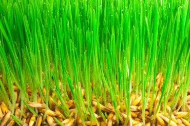 Канадский газон весом 15 тонн непустили вПетербург