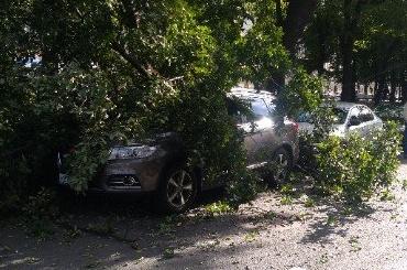 Дерево придавило автомобиль наКонногвардейском бульваре