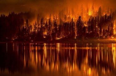 Ленобласть втройке лидеров поколичеству лесных пожаров
