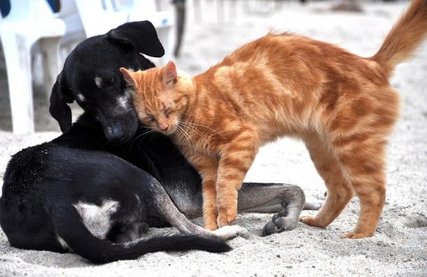 Женщина рассказала, как собака спасла старого кота