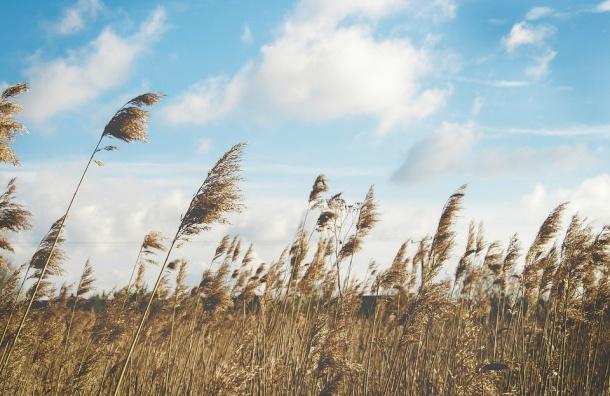 МЧС: вПетербурге обещают штормовой ветер