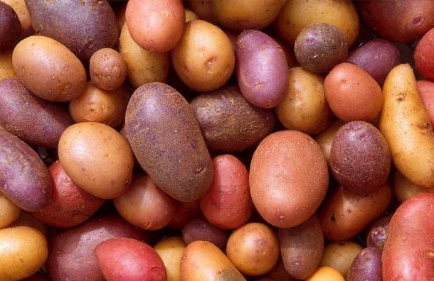 Роскачество рассказало, как найти лучшую картошку