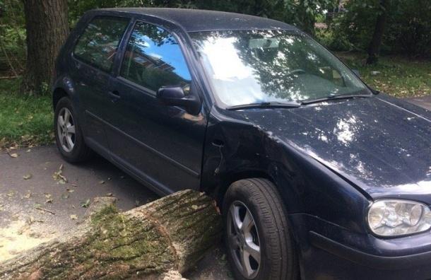 Уронившие дерево намашину рабочие приклеили листок состережением
