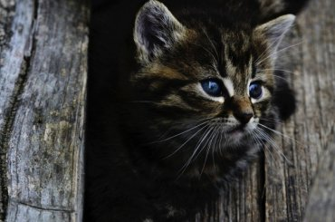 Вгородском суде рассматривают дело обусыплении бродячих животных