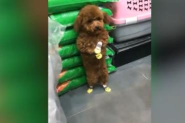 Реакция собаки наругань хозяина удивила пользователей Сети