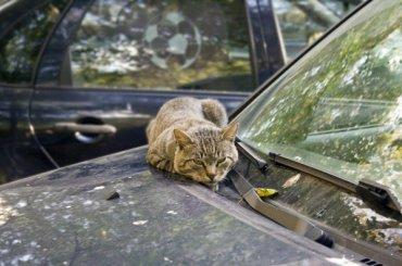 Синоптики обещают Петербургу аномальное тепло