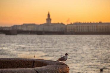 Главный синоптик: погода вПетербурге побила рекорд 68-летней давности