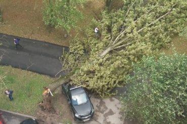 Дерево рухнуло наавтомобиль наулице Фрунзе