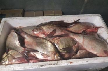 Петербургская фирма хранила более 200кг просроченной рыбы