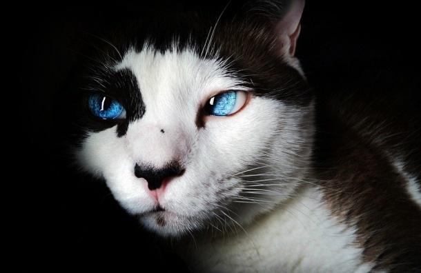 Неизвестные убили 12 котов-артистов